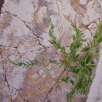 Изображение горных растений в скалах.